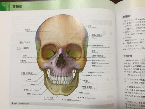 骨学 解剖実習 医学生